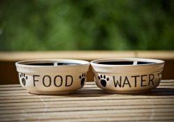 Acana hundefoder - naturligt og sundt for din hund